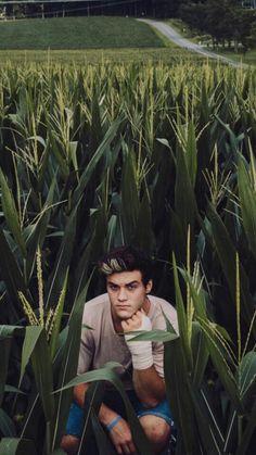 Jaw king in the corn field