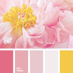 Yellow Peonies, Pink Yellow, Pink Color, Yellow Shades, Pastel Pink, Colour Schemes, Color Combos, Palette Design, Pink Palette