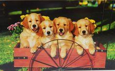 "New Puzzlebug 500 Piece Jigsaw Puzzle Yellow ""Labrador Puppies"" Puppy Dog Gift   #Puzzlebug #LabradorRetriever"