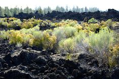 Plants Growing in Lava Rock Field by  by MogieG123 Resources & Stock Images / Stock Images / Nature / Landscapes©2012-2016 MogieG123 A new landscape is forming from old lava flows in Oregon from the Newberry shield volcano.