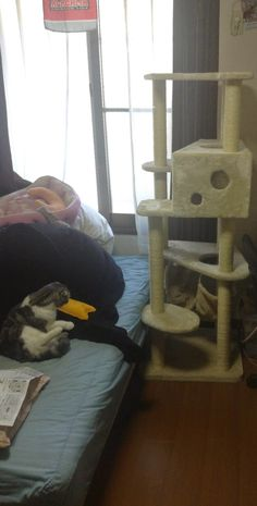 Today, when Tokyo surrenders to a hamster, an update on my submission package and Goo's new cat tower.