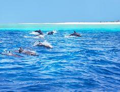 Anantara Dhigu - Se tiver sorte, ainda é possível avistar golfinhos