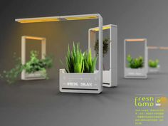 The Fresh Lamp is a nice way to integrate lamps, plant care and unique décor. Taking advantage of sensors and technology, It helps you water and manure the plants optimally and the LED lamp works as a great mood setter. Indoor Garden, Indoor Plants, Grow Lamps, Smart Garden, Concrete Crafts, Garden Lamps, Led Grow Lights, Hydroponic Gardening, Plant Care