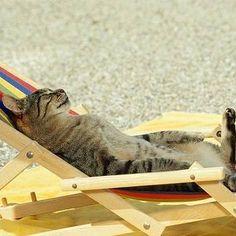 Bota a cara no sol!  Sexta-feira, de férias 💃💃🏖 #tôdeférias #fériasdaCats #cats #catshirtdaddy #funnycats #catcostumes