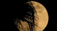 Shadows of a palm tree appear over the full moon as it shines in Los Angeles.