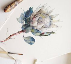 Big white protea is done :) Watercolor illustration Protea Art, Flor Protea, Protea Flower, Watercolor Sketch, Watercolor Illustration, Watercolor Flowers, Watercolor Paintings, Painting & Drawing, Watercolours