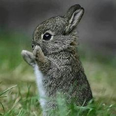 Baby rabbit It's spring and the wildlife is waking up and active. PLEASE SLOW DOWN ON COUNTRY ROADS and minimize the annual slaughter on our roads!
