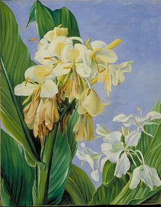 Kew: Marianne North Gallery: Painting 72: Flowers of Hedychium, Botanic Gardens, Brazil