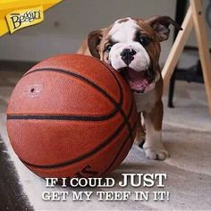 Small Medium 24 Kobe Bryant Dog Jersey La Lakers Nba Pet