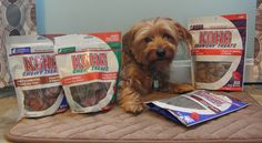 KONG Premium Treats Review & Giveaway — Kirby the Dorkie, @Kirby the Dorkie @KONG Treats #Giveaway
