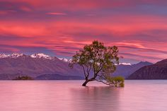 Lonely Tree in lake Wanaka by James PhotoGraphy - Photo 92792869 - 500px