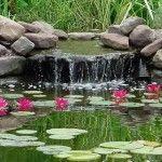 Avec différents exemples en photos, je vous explique quels sont les éléments qui caractérisent chaque style de bassin.
