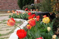 Verschönern Sie Ihren Hof – Ideen für eine einladende Frühlingsstimmung im Garten