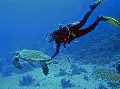A diver finding a new friend under the water in the Maldives | Find out more at www.frontiergap.com #diving #turtles #scuba