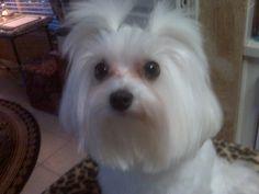 Murphy in tails, so cute!