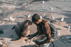 I run into this man in Hout Bay harbour feeding this seal scraps of bait left over from an earlier fishing trip. This Man, Bait, Bradley Mountain, Seal, Fishing, Photography, Photograph, Fotografie, Photoshoot