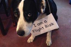 Dog shaming | Dog Shaming - Mirror Online