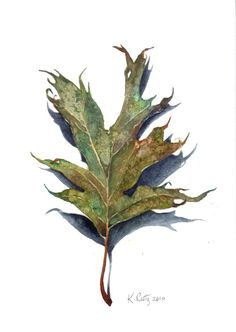 Green Pin Oak Watercolor Reproduction