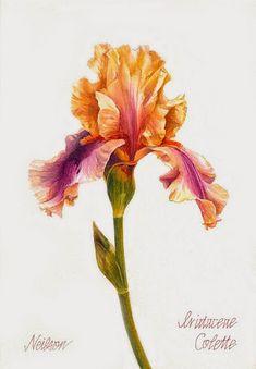 Imprimolandia: botánica