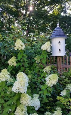 Limelight hydrangeas Modern Country, Modern Farmhouse, Limelight Hydrangea, White Flower Farm, Woodland Garden, White Gardens, Garden Inspiration, Bird Houses, Hydrangeas