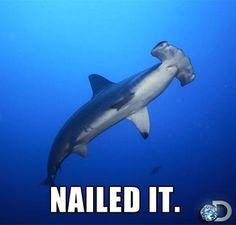 SHARK WEEK - Nailed It - Love