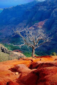 "brutalgeneration: ""Lonesome Tree at Waimea Canyon Kauai (by BBMaui) """
