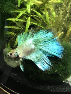 267 best aquariums and fish images on pinterest fish tanks