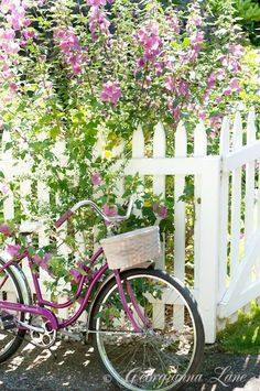 Purple bicycle, white picket fence and cottage garden Image Zen, Vibeke Design, Deco Nature, White Picket Fence, Picket Fences, White Fence, Bloom, Bicycle Art, Vintage Bicycles