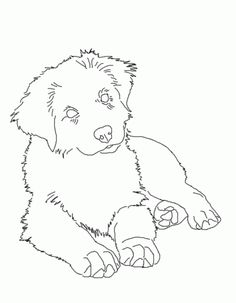 Image result for mini australian shepherd line drawing | Quilts ...