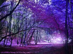 Purple trees