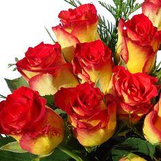 Vibrant colors, yellow, orange Color Naranja, 10 Picture, Vibrant Colors, Orange, Yellow, Spring, Flowers, Plants, Pictures