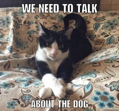 We need to talk about the dog.
