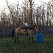 Beautiful 7 year old mare! Quarter Horse for sale in Clarkston, Michigan :: HorseClicks