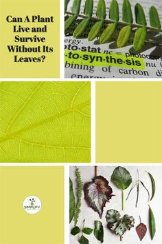 Have you ever thrown away a plant that had no leaves? Loads of people have asked me lately can a plant live and survive without its leaves? I always answer maybe! But to find out more why not check out this article I wrote on whether a plant can live or survive without its leaves and the reasons behind the answer. #gardeningaustralia #homegardening #ilovegardening #backyardgardening #epicgardening Organic Nutrients, Organic Soil, Raised Bed, Raised Garden Beds, Vegetable Garden Soil, Leaf Mulch, Plant Tissue, Plant Needs, All Plants