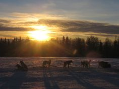 Dog Mushing Near Fairbanks, Alaska.