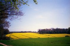 Kingswood Fields / Olympus XA2 / Boots ISO 200 film