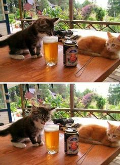I don't think he likes the beer.....<3