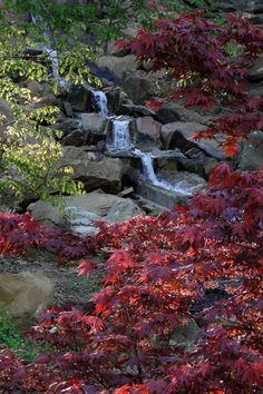 This gorgeous waterfall and bright foliage can be found at Honor Heights Park in Muskogee.