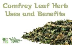 Uses and Benefits of Comfrey Leaf  - this controversial herb is believed to help speed up wound and bone healing!