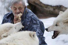 Mange avec les loups [video]