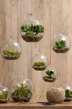Create mini-garden worlds filled with your favourite small plants in hanging glass spheres.