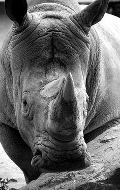 Rhino~♛
