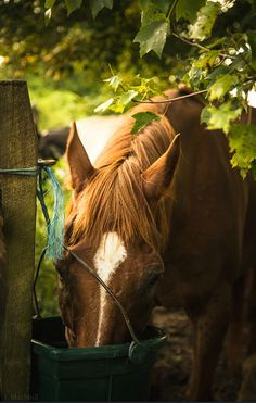 """This PIC reminds me of 2 Different & GREAT HORSES!TV STAR, MR. ED & THE IMMORTAL SECRETARIAT!! (MY BRAIN SHOULD BE LABELED """"THE TWILIGHT ZONE!"""")"""