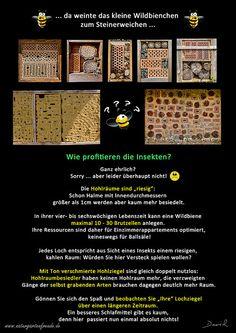 Insektennisthilfe insect nesting aid Nisthilfe Insektenhotel Bienenhotel  insect hotel bug house Wildbienen wild bee Lochziegel hollow perforated brick