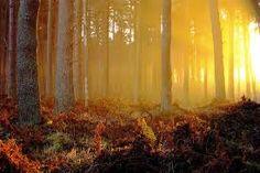 """""""…la sensación de que había cruzado una de esas fronteras invisibles y penetrando en el Otro Mundo. Ya que, en el mismo instante en que mis pies tocaron el sendero, la neblina adquirió luminosidad y brillo, todo oro y resplandor, iluminada por los rayos del sol que se ponía."""" Stephen R. Lawhead, en """"Arturo"""""""