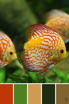 ZJ Colour Palette 58 #colourpalette #colourinspiration