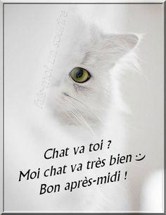 Chat va toi ? Moi chat va très bien :) Bon après-midi ! #bonapresmidi chat blanc oeil felin bonne journeee