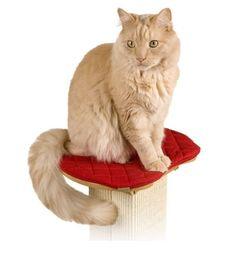 Cats scratcher   Bootsie's Combination Scratcher