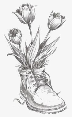 tulip, Hand-painted Tulip, Flowers, Sketch Of Flowers PNG Image