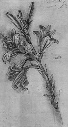 Leonardo da Vinci - Lily stems